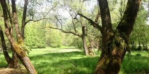 trekking pedemontano1