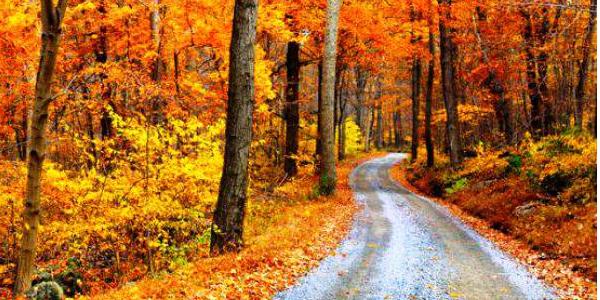 cansiglio d'autunno