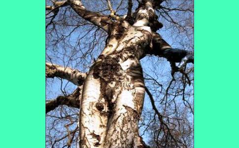 riconessione con la natura