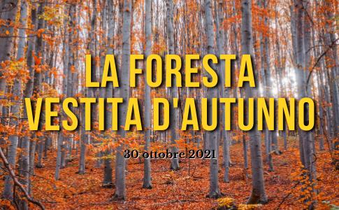 foresta_autunno_2021